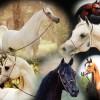 وحدة تعليمية عن الخيول